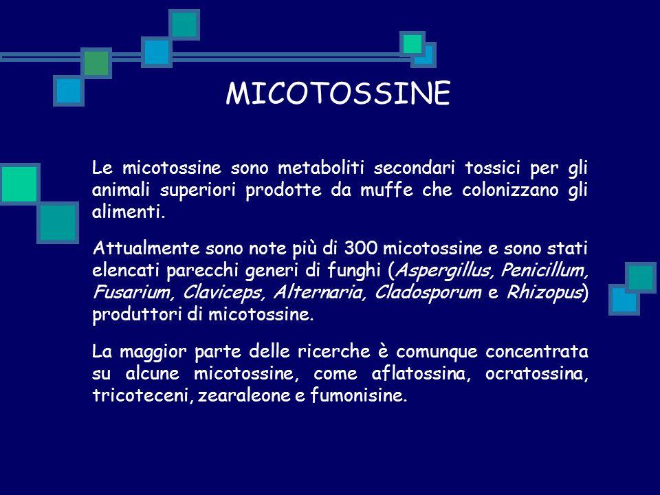 MICOTOSSINE Le micotossine sono metaboliti secondari tossici per gli animali superiori prodotte da muffe che colonizzano gli alimenti.