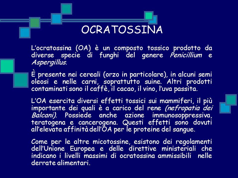 OCRATOSSINA L'ocratossina (OA) è un composto tossico prodotto da diverse specie di funghi del genere Penicillium e Aspergillus.