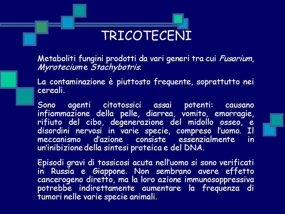 TRICOTECENI Metaboliti fungini prodotti da vari generi tra cui Fusarium, Myrotecium e Stachybotris.