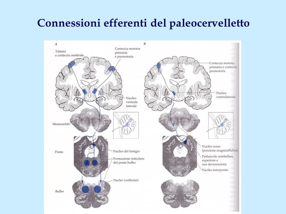 Connessioni efferenti del paleocervelletto