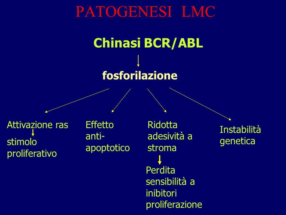 PATOGENESI LMC Chinasi BCR/ABL fosforilazione Attivazione ras