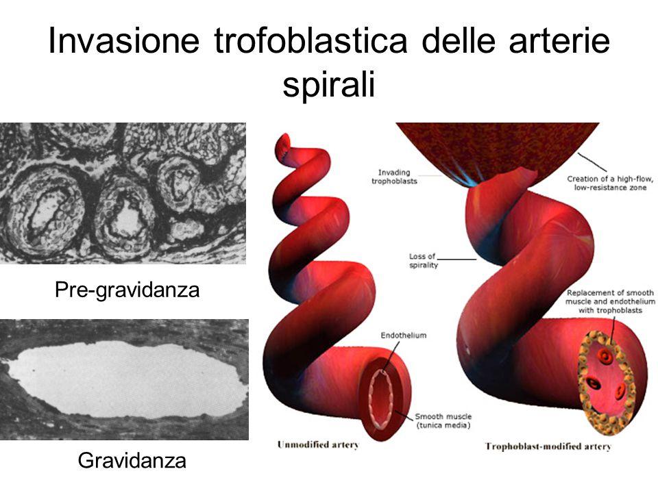 Invasione trofoblastica delle arterie spirali