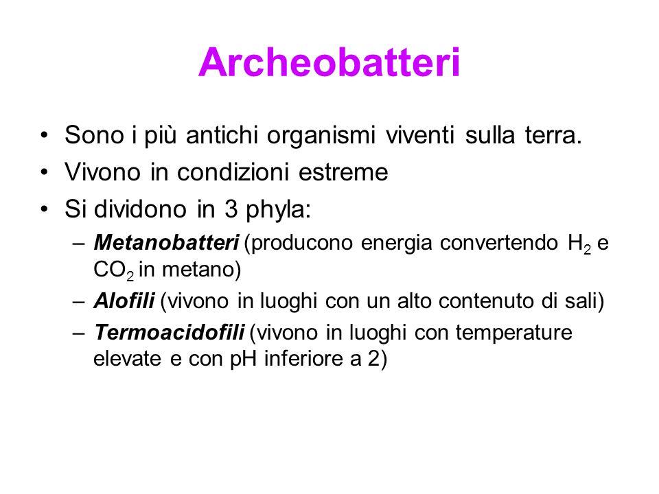 Archeobatteri Sono i più antichi organismi viventi sulla terra.