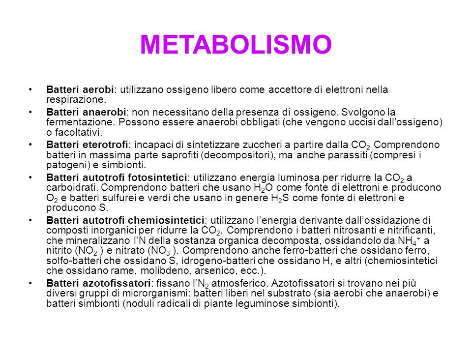 METABOLISMO Batteri aerobi: utilizzano ossigeno libero come accettore di elettroni nella respirazione.