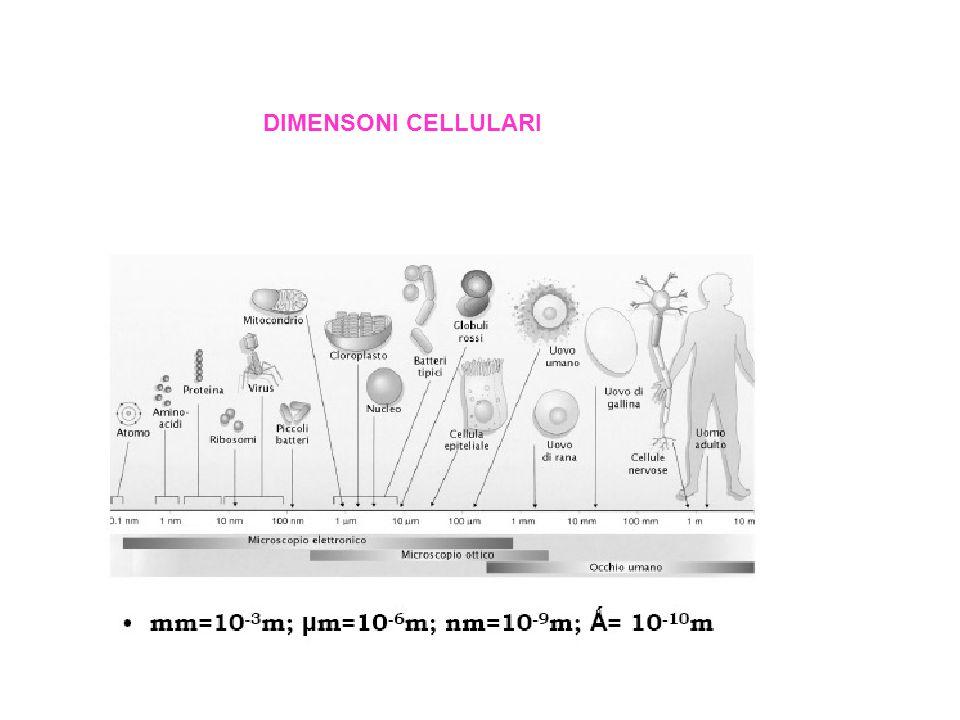 DIMENSONI CELLULARI
