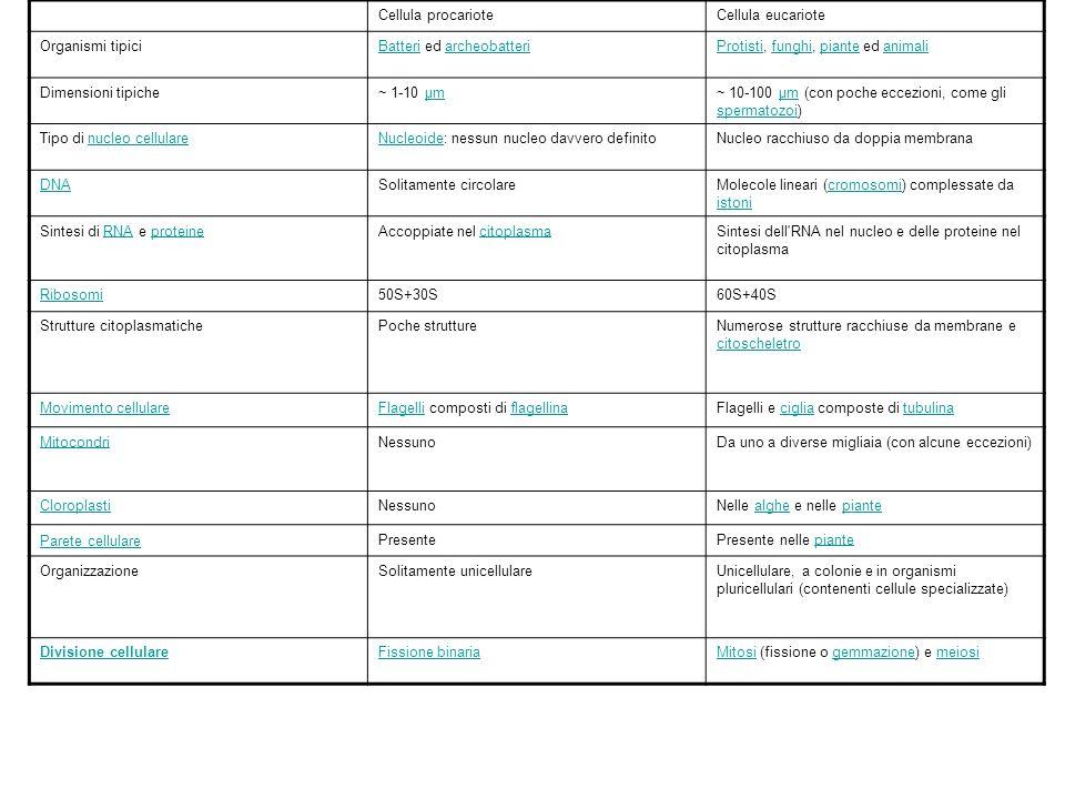 Cellula procariote Cellula eucariote. Organismi tipici. Batteri ed archeobatteri. Protisti, funghi, piante ed animali.