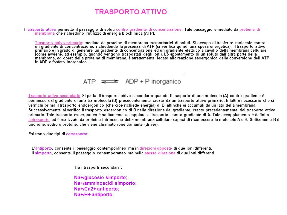 TRASPORTO ATTIVO Na+/glucosio simporto; Na+/amminoacidi simporto;