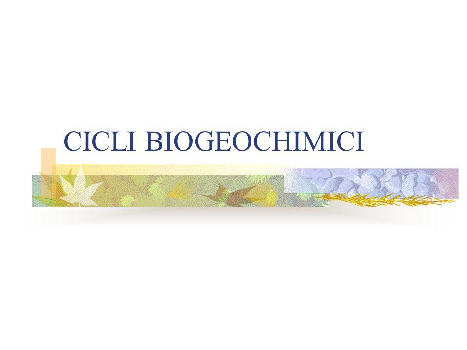 CICLI BIOGEOCHIMICI