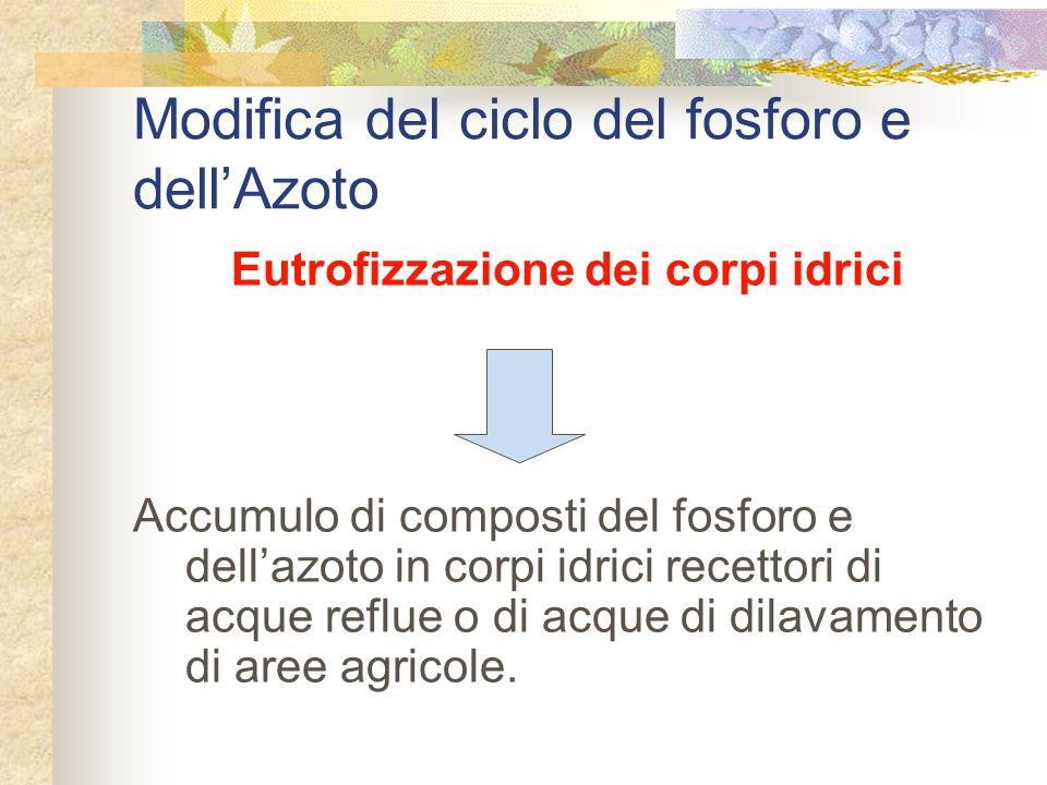 Modifica del ciclo del fosforo e dell'Azoto