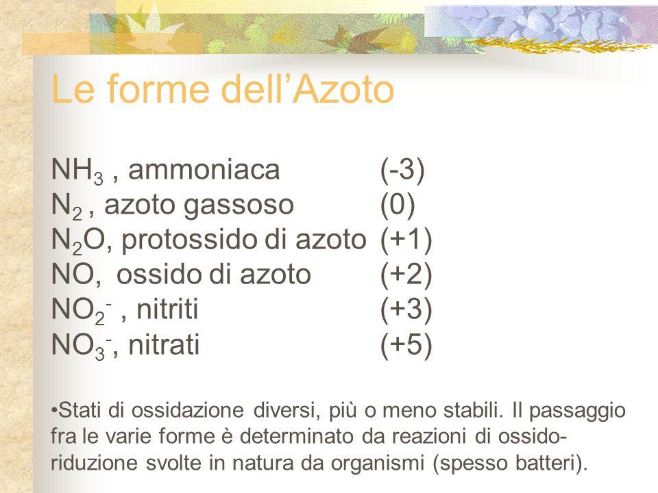 Le forme dell'Azoto NH3 , ammoniaca (-3) N2 , azoto gassoso (0)