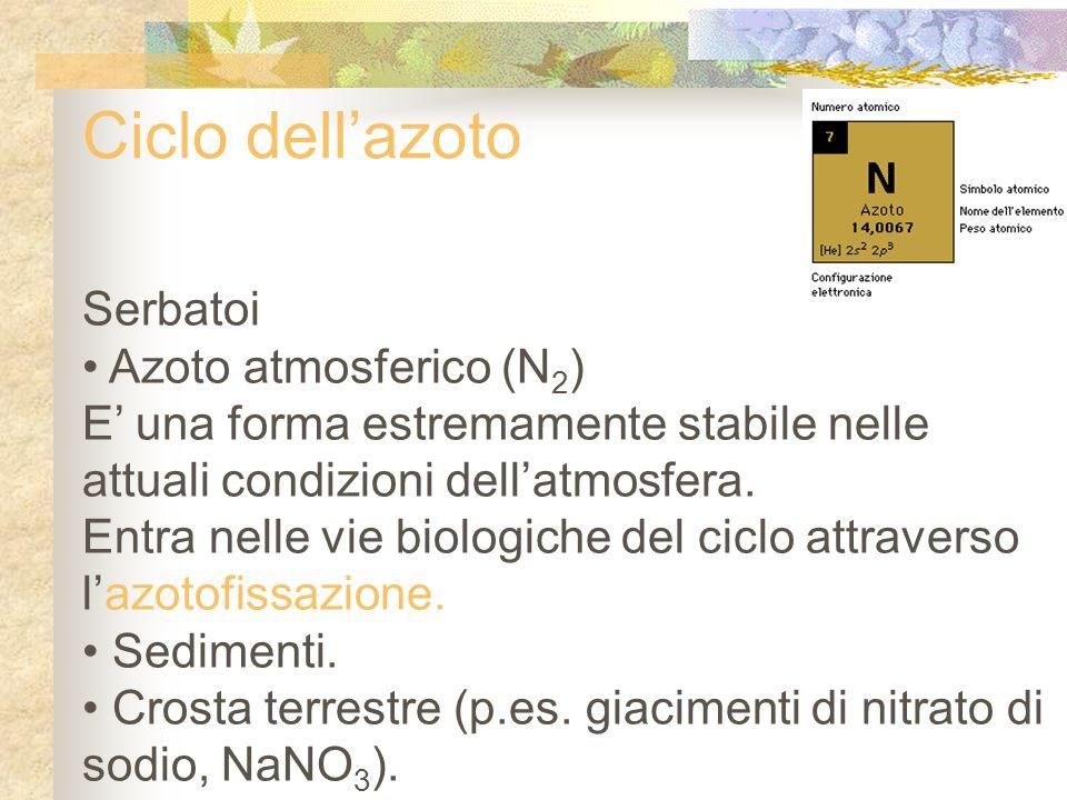 Ciclo dell'azoto Serbatoi Azoto atmosferico (N2)