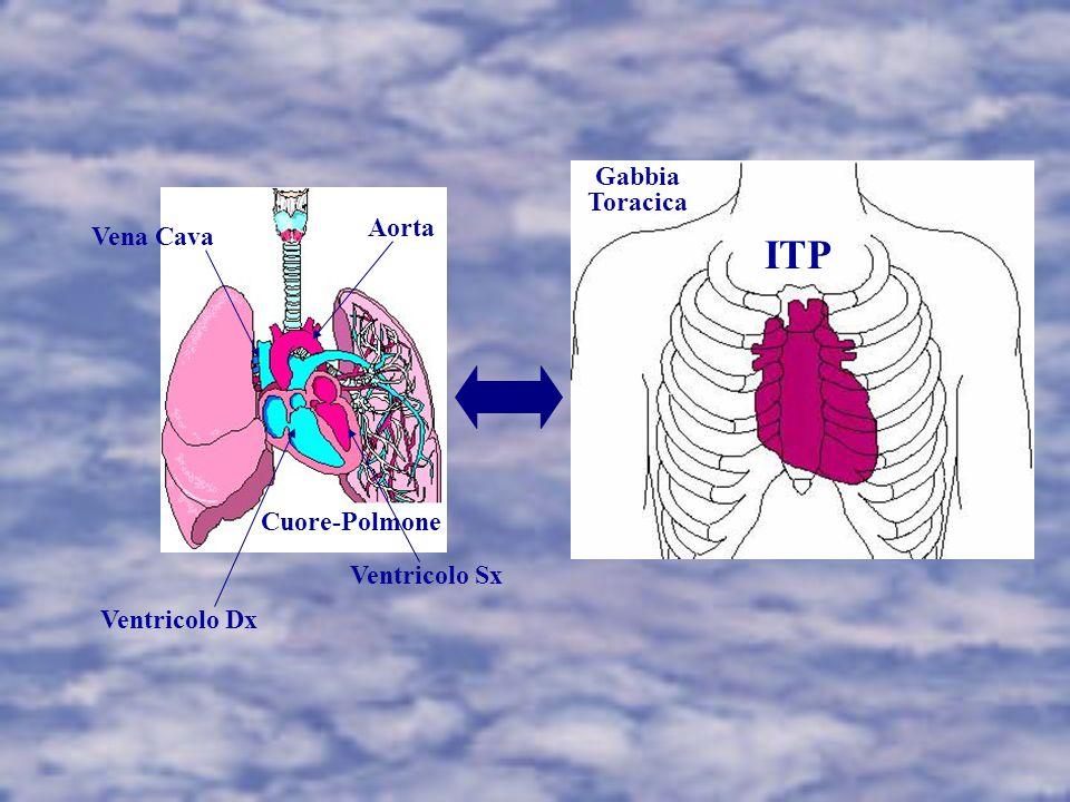 ITP Gabbia Toracica Aorta Vena Cava Cuore-Polmone Ventricolo Sx