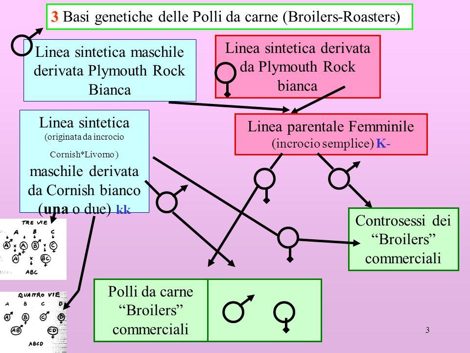 3 Basi genetiche delle Polli da carne (Broilers-Roasters)