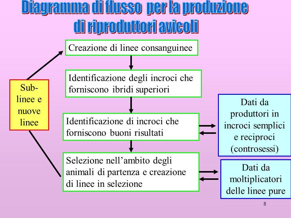 Diagramma di flusso per la produzione di riproduttori avicoli