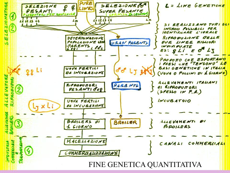 FINE GENETICA QUANTITATIVA