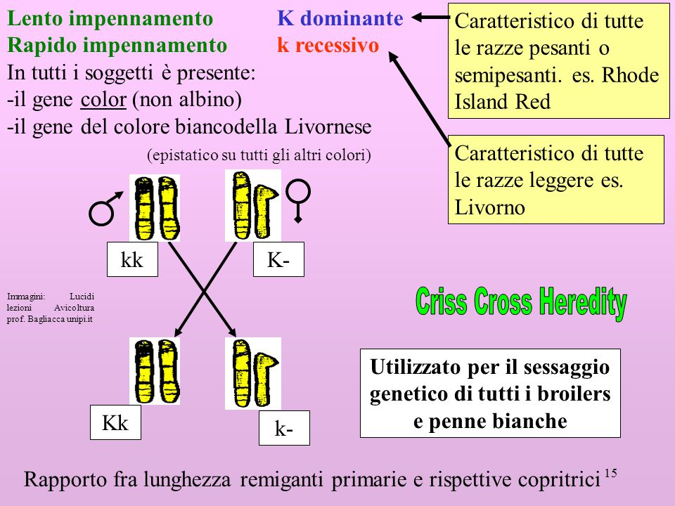 Criss Cross Heredity Lento impennamento K dominante