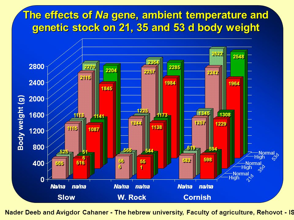 The effects of Na gene, ambient temperature and genetic stock on 21, 35 and 53 d body weight