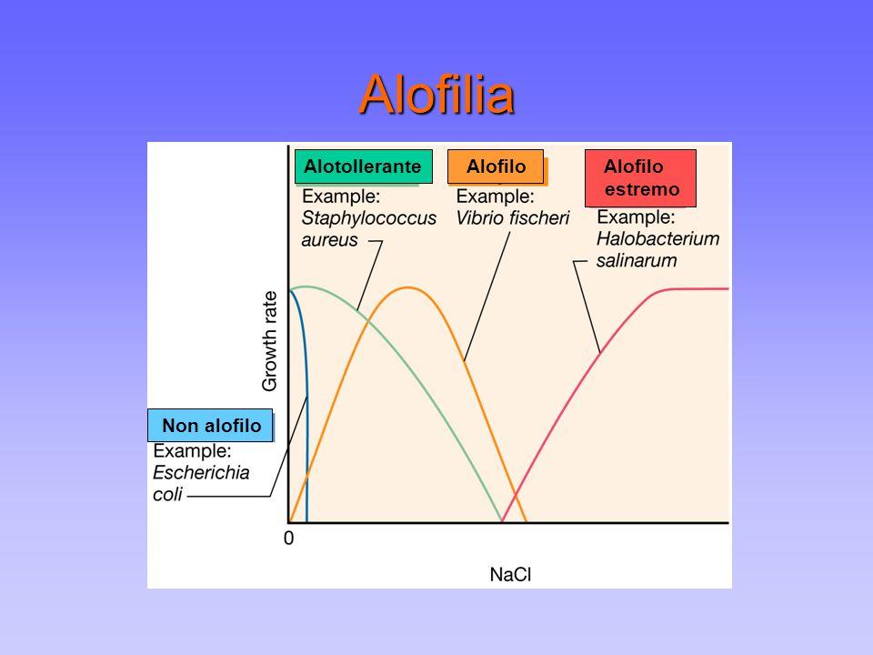 Alofilia Alotollerante Alofilo estremo Non alofilo