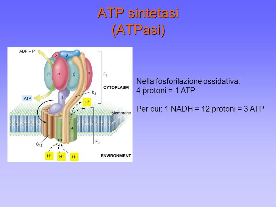 ATP sintetasi (ATPasi)