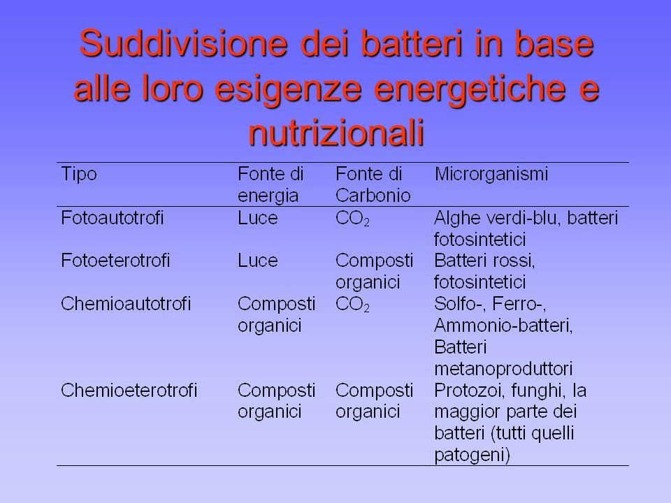 Suddivisione dei batteri in base alle loro esigenze energetiche e nutrizionali