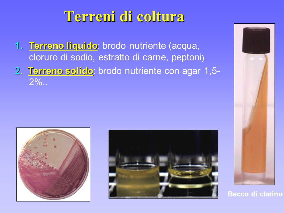 Terreni di coltura Terreno liquido: brodo nutriente (acqua, cloruro di sodio, estratto di carne, peptoni).