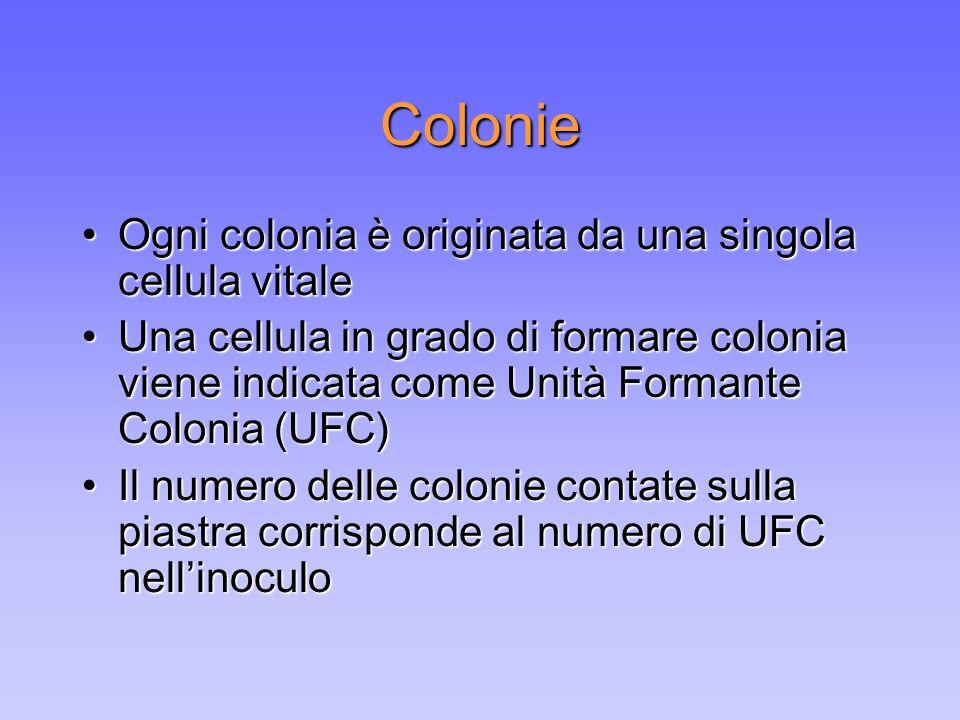 Colonie Ogni colonia è originata da una singola cellula vitale