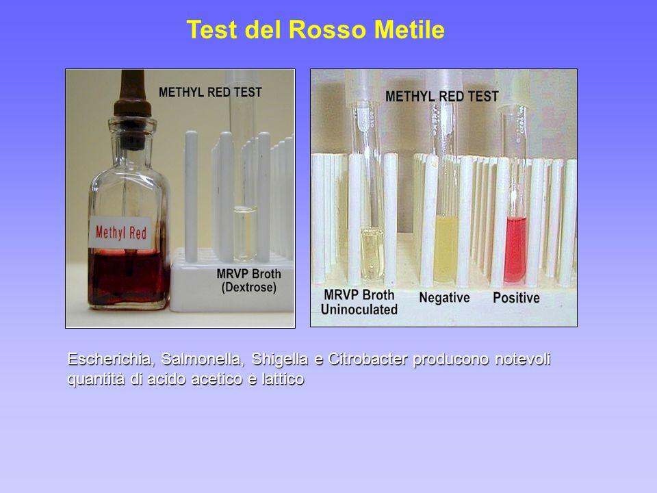 Test del Rosso Metile Escherichia, Salmonella, Shigella e Citrobacter producono notevoli quantità di acido acetico e lattico.