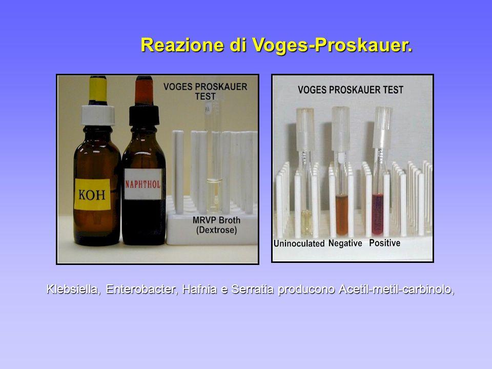 Reazione di Voges-Proskauer.