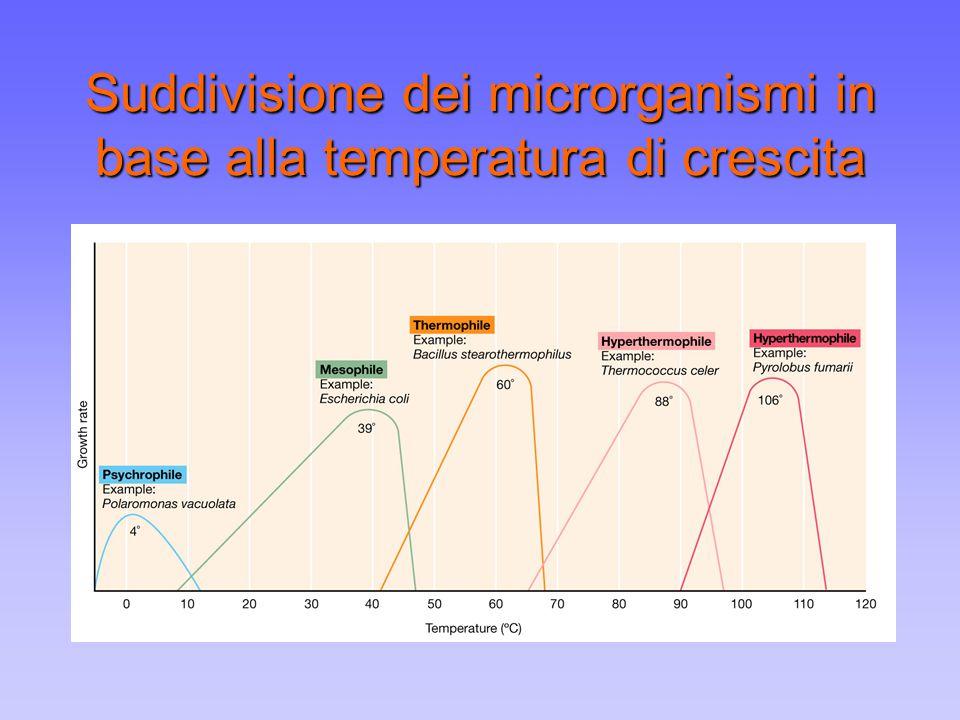 Suddivisione dei microrganismi in base alla temperatura di crescita