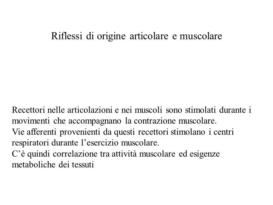 Riflessi di origine articolare e muscolare