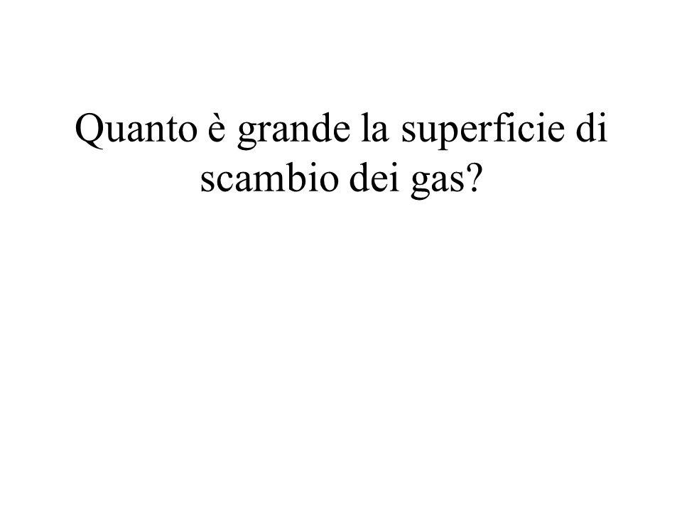 Quanto è grande la superficie di scambio dei gas