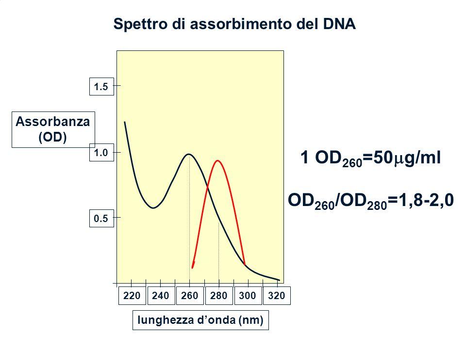 1 OD260=50g/ml OD260/OD280=1,8-2,0 Spettro di assorbimento del DNA