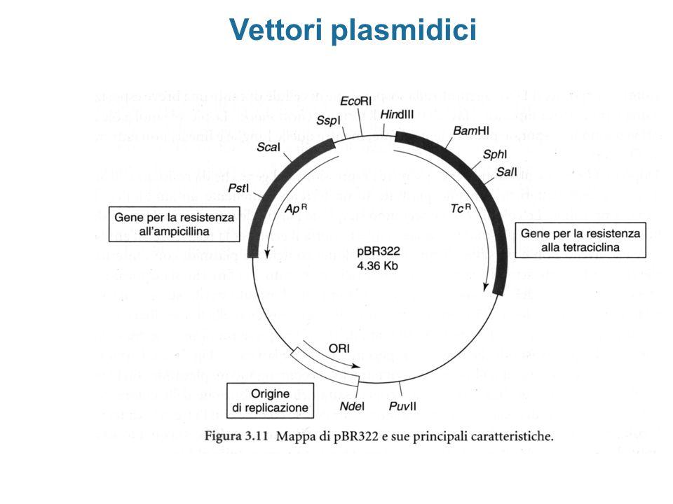 Vettori plasmidici