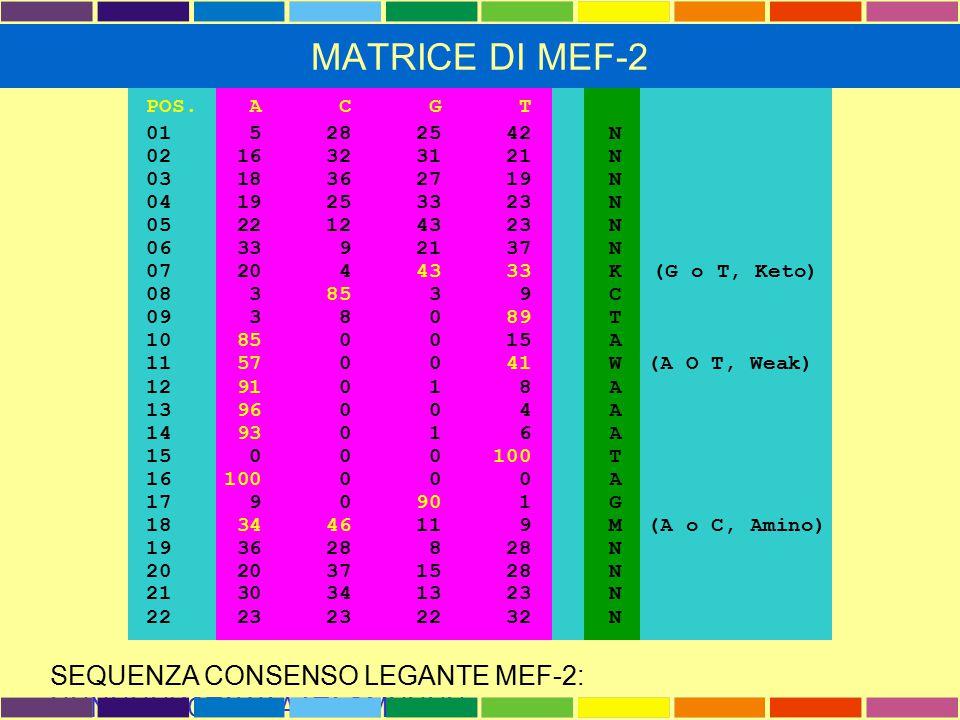MATRICE DI MEF-2 POS. A C G T. 01 5 28 25 42 N. 02 16 32 31 21 N.