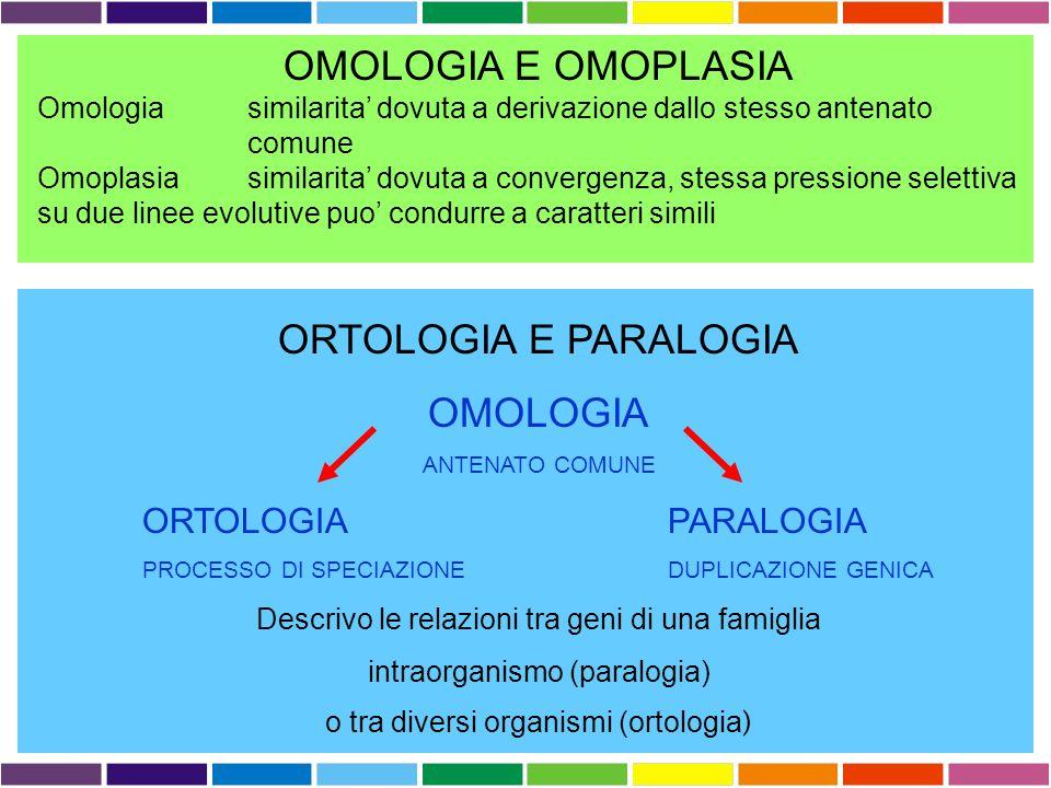OMOLOGIA E OMOPLASIA ORTOLOGIA E PARALOGIA OMOLOGIA