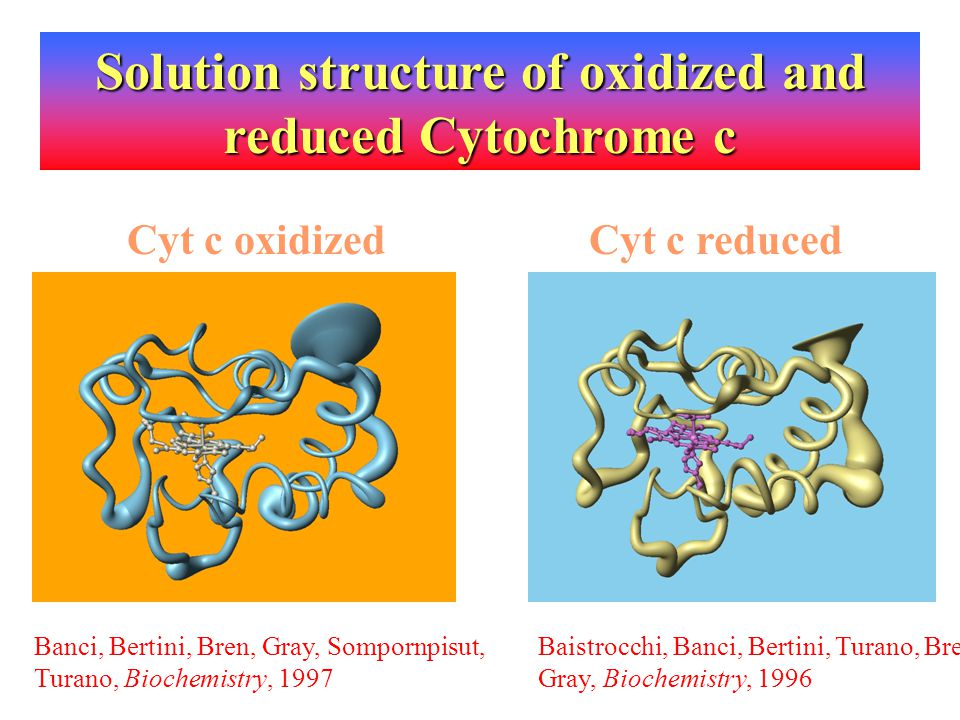 Solution structure of oxidized and reduced Cytochrome c