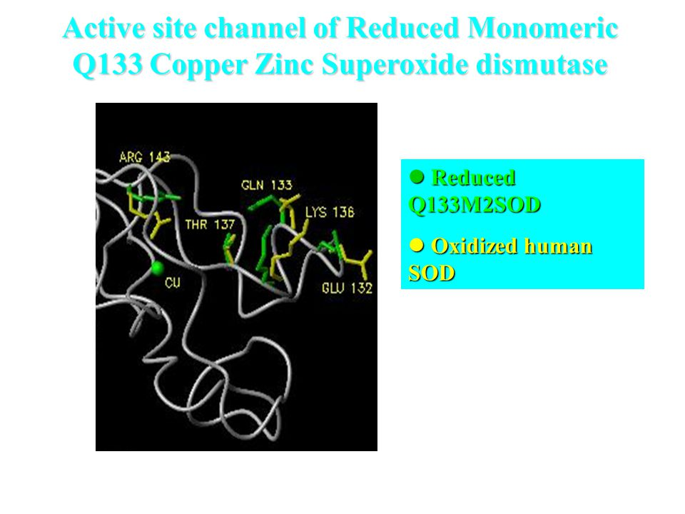 Active site channel of Reduced Monomeric Q133 Copper Zinc Superoxide dismutase