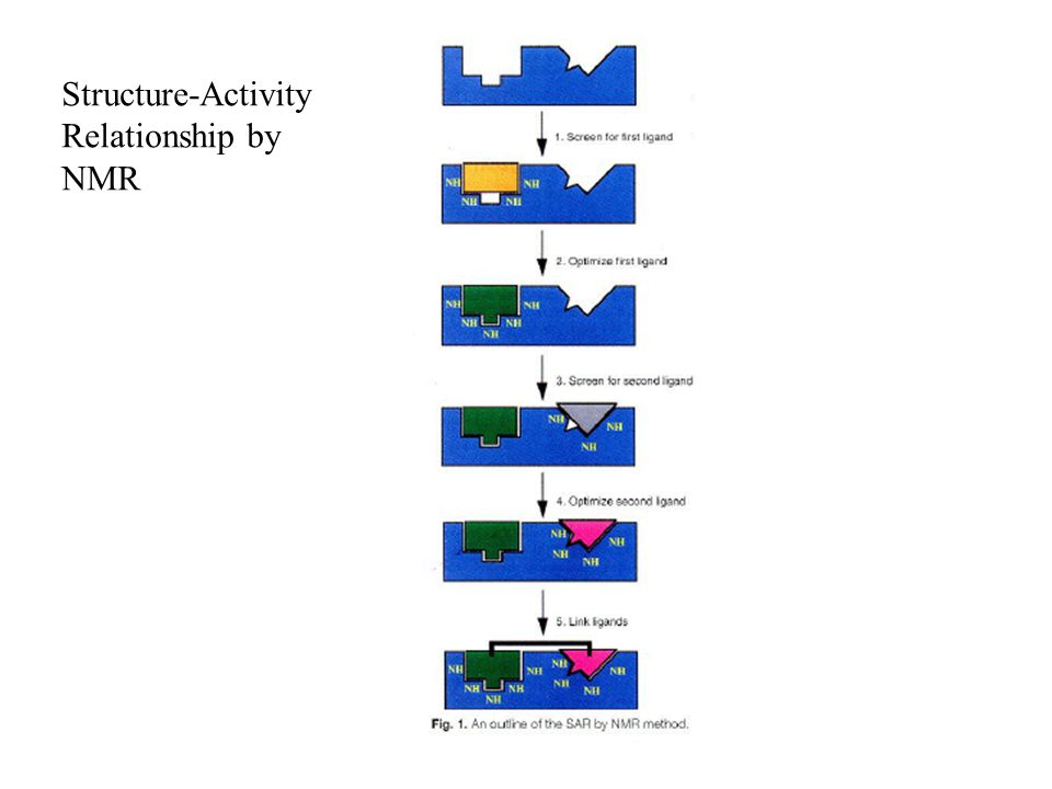 Structure-Activity Relationship by NMR