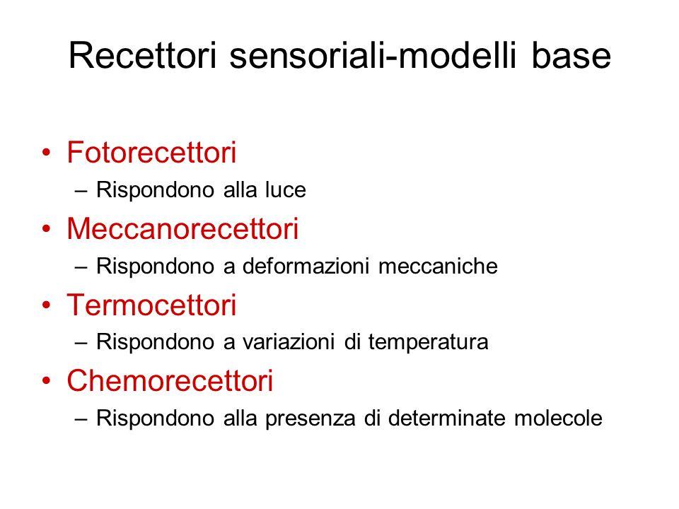 Recettori sensoriali-modelli base