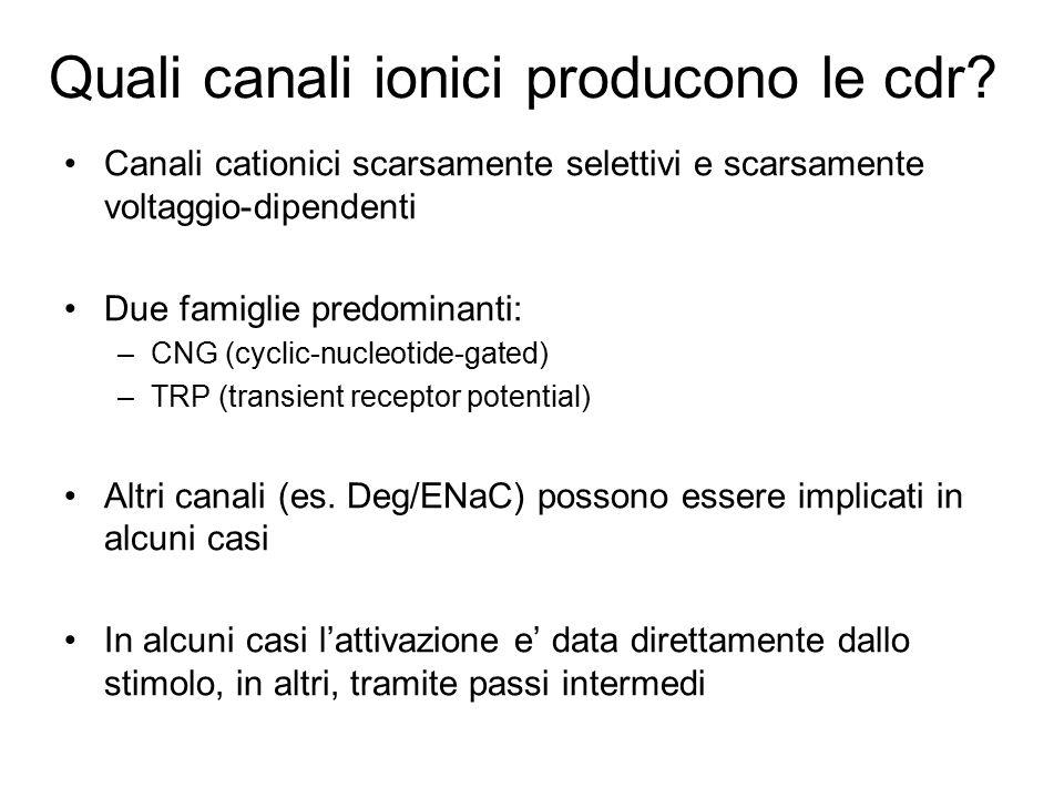 Quali canali ionici producono le cdr