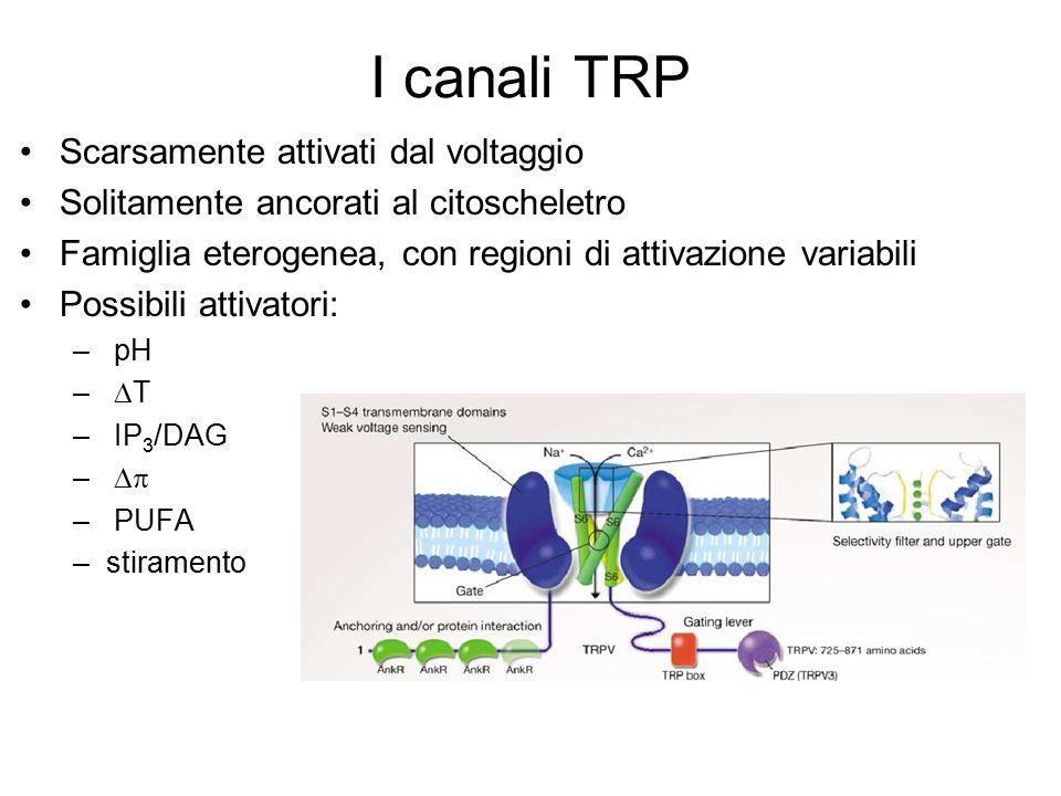 I canali TRP Scarsamente attivati dal voltaggio