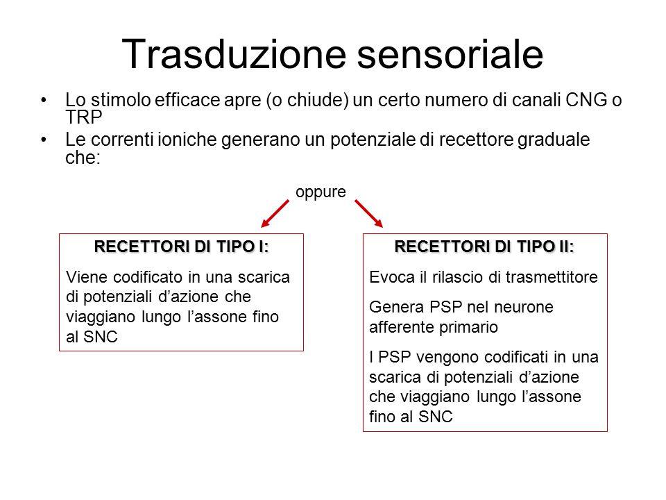 Trasduzione sensoriale