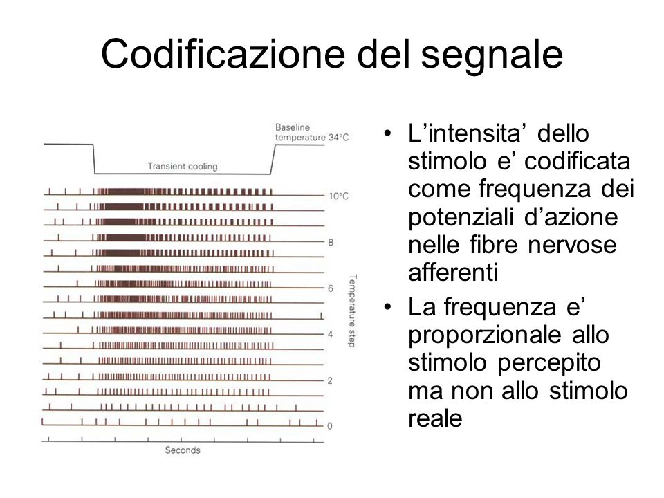 Codificazione del segnale