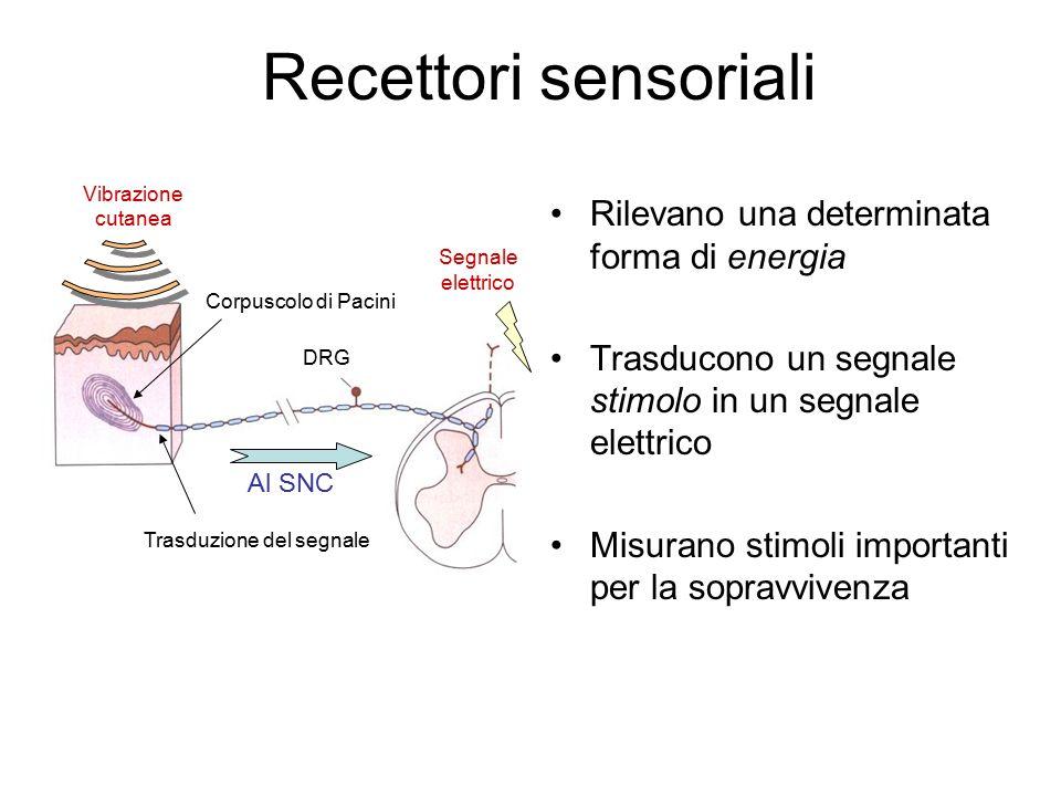 Recettori sensoriali Rilevano una determinata forma di energia