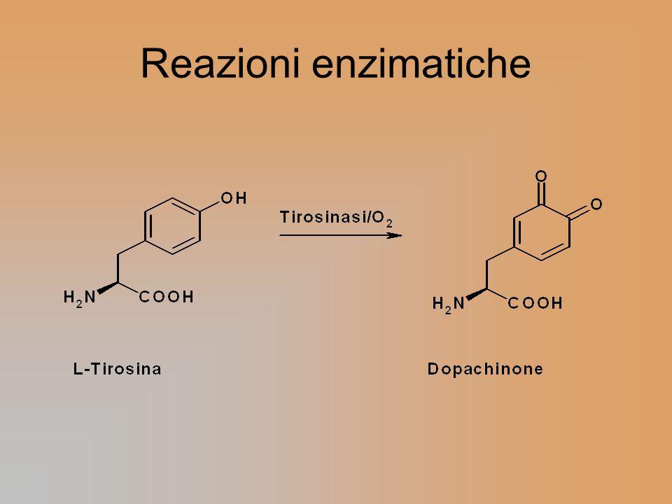 Reazioni enzimatiche