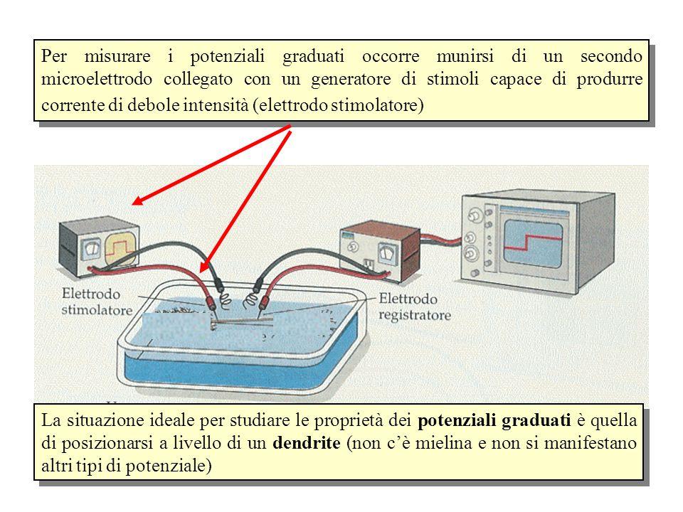 Per misurare i potenziali graduati occorre munirsi di un secondo microelettrodo collegato con un generatore di stimoli capace di produrre corrente di debole intensità (elettrodo stimolatore)