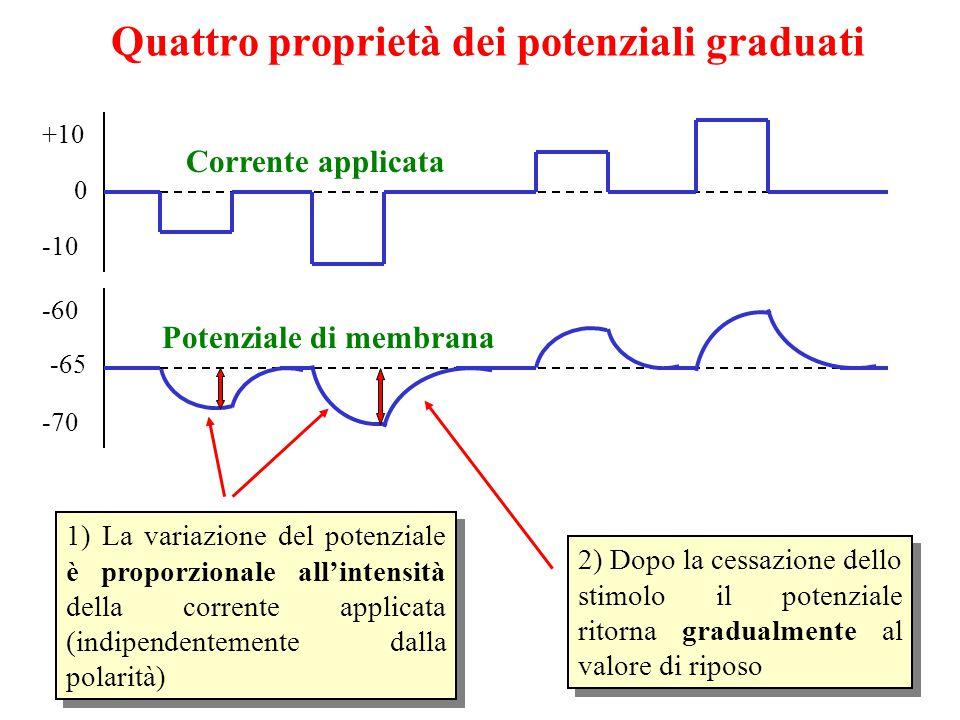 Quattro proprietà dei potenziali graduati