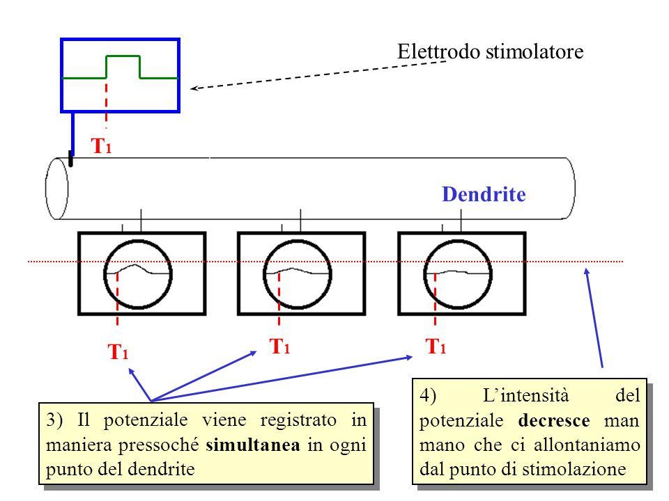Elettrodo stimolatore