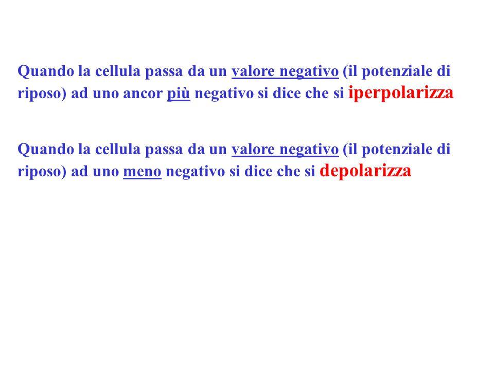 Quando la cellula passa da un valore negativo (il potenziale di riposo) ad uno ancor più negativo si dice che si iperpolarizza