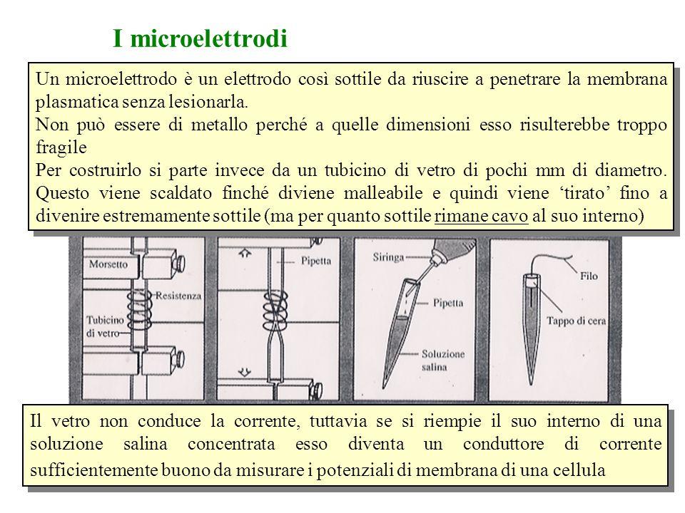 I microelettrodi Un microelettrodo è un elettrodo così sottile da riuscire a penetrare la membrana plasmatica senza lesionarla.